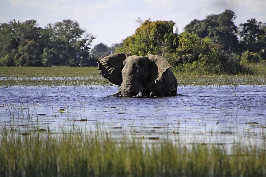 olifant-in-het-water-kruger-park-incentive-zuid-afrika